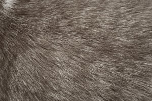 Gray Cat Fur Texture - Free High Resolution Photo
