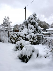 Snow Covered Garden - Free High Resolution Photo