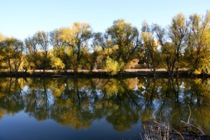 Sun on Autumn Trees Reflected in Water - Free High Resolution Photo
