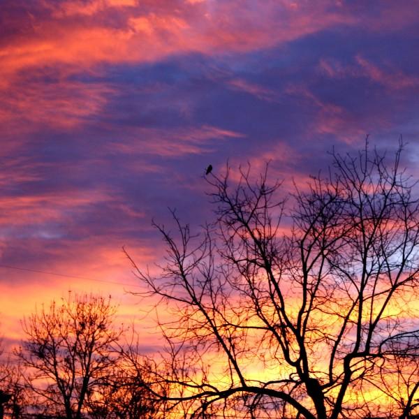 Sunrise through Winter Trees - Free High Resolution Photo