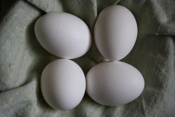 Eggs on Green Dish Towel - Free High Resolution Photo