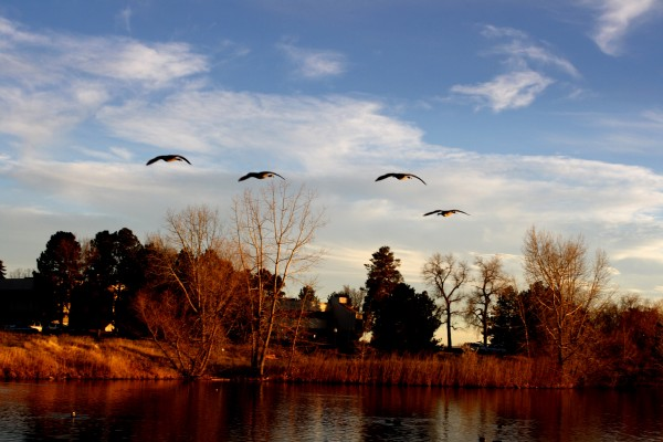 Geese Flying Over Lake - Free High Resolution Photo