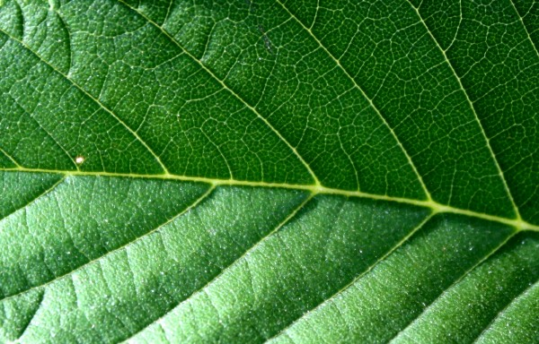 Leaf Texture - Free High Resolution Photo