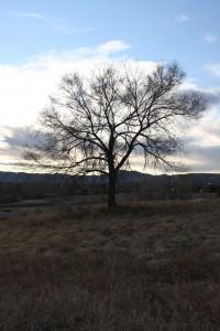 Leafless Tree - Free High Resolution Photo