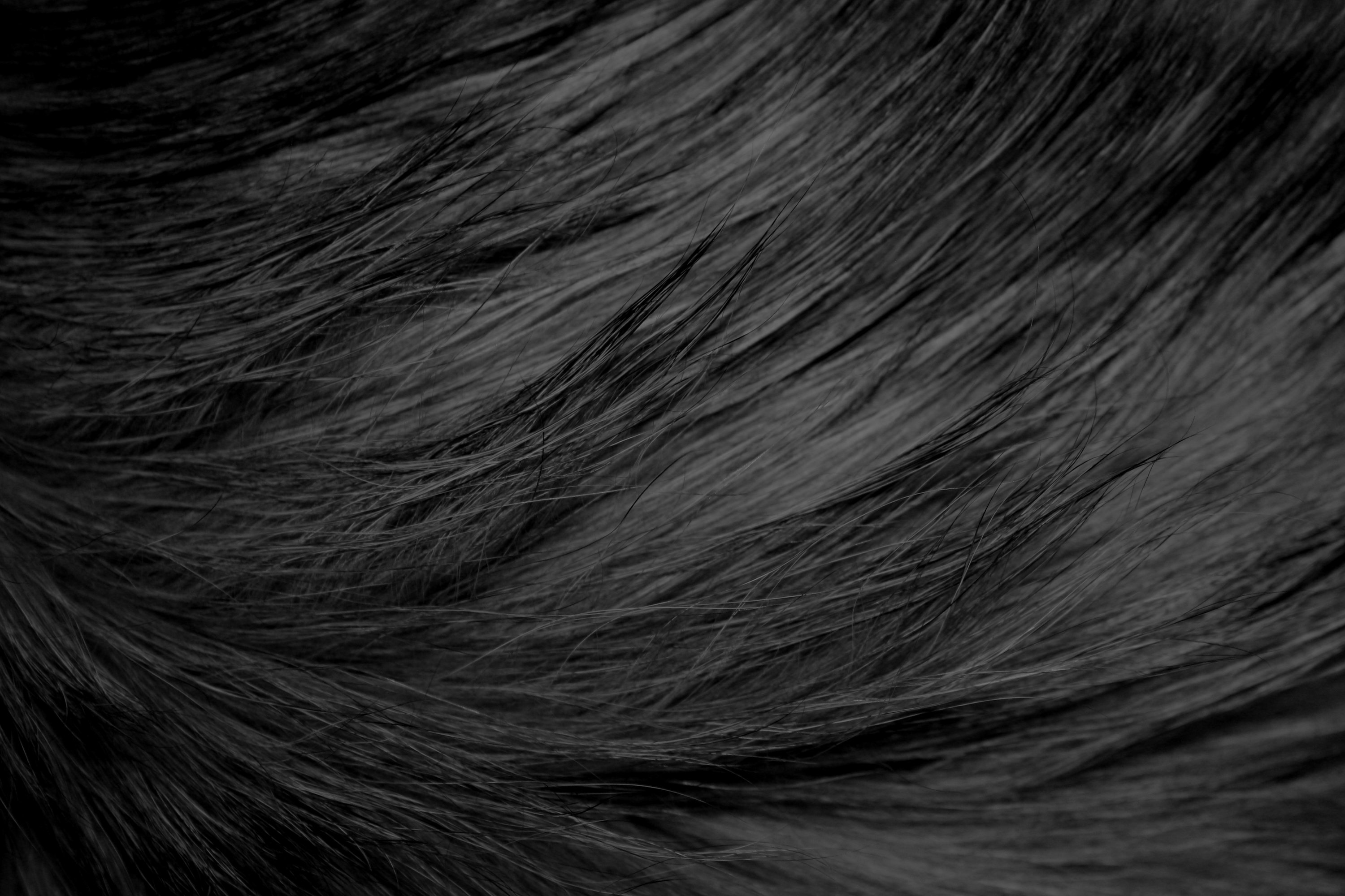 Long Haired Black Cat Fur Texture Picture
