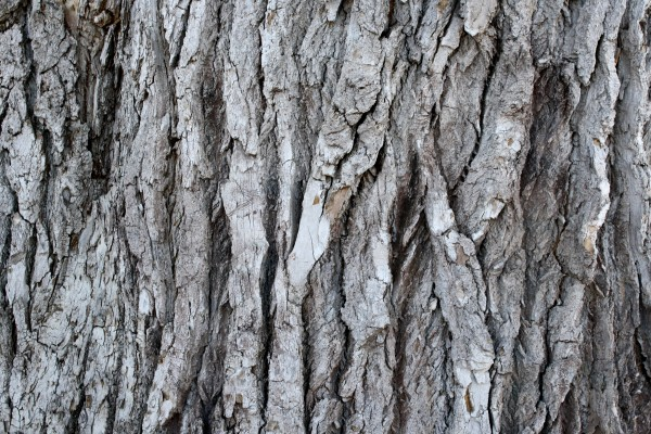 Bark Texture - Free High Resolution Photo