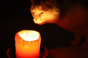 Cat Sniffing Candle - Free High Resolution Photo