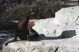 Sea Lion - Free high resolution photo