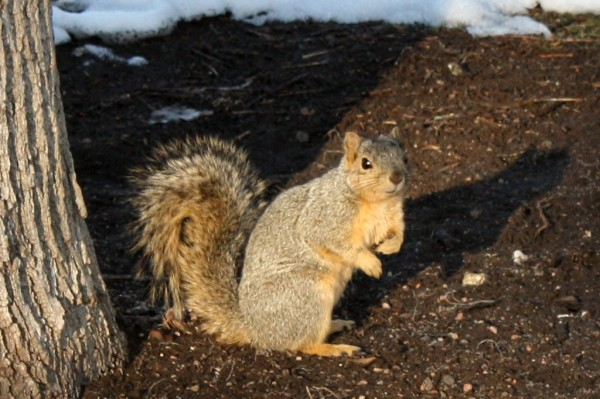 Squirrel by Base of Tree - Free photo