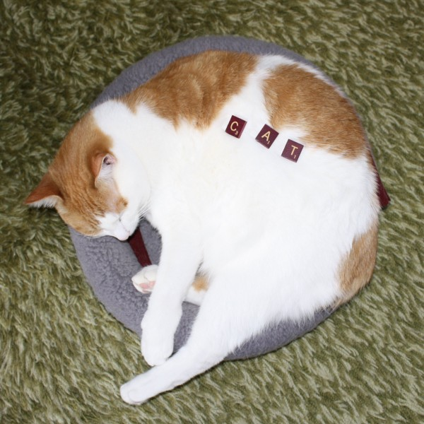 Cat - free high resolution photo of a cat with Scrabble letter tiles spelling the word cat