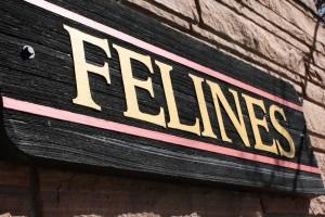 Felines Sign - Free High Resolution Photo