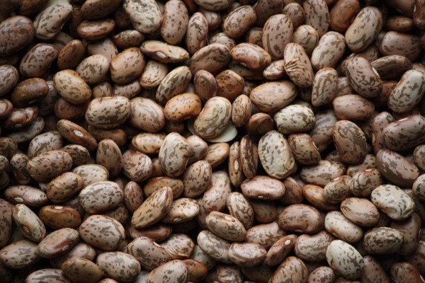 Pinto Beans Texture - Free High resolution photo
