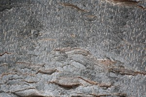 Tree Bark Close Up Texture - Free High Resolution Photo