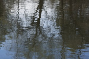 Tree Reflections in River Water - Free High Resolution Photo