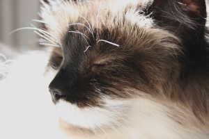Cat with Eyes Closed Basking in Sunbeam Close Up - Free High Resolution Photo