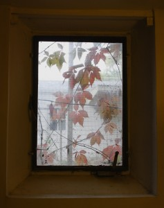 Autumn Leaves Through Basement Window - Free High Resolution Photo
