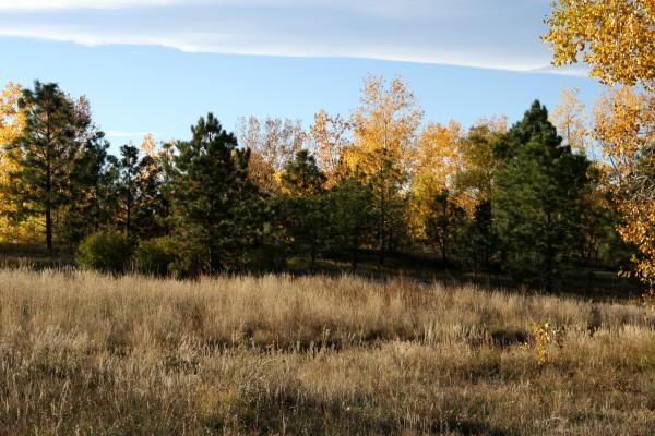 Autumn Meadow - Free High Resolution Photo