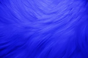 Blue Fur Texture - Free High Resolution Photo