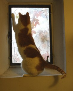 Cat Playing in Window Sill - Free High Resolution Photo