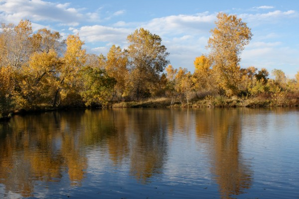 Golden Fall Trees Reflected in Lake - Free High Resolution Photo