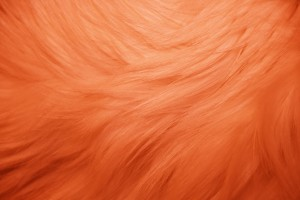 Orange Fur Texture - Free High Resolution Photo