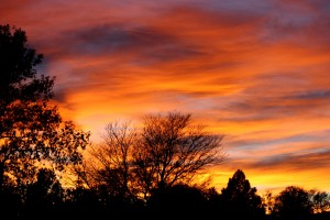 Orange Sunset with Trees - Free High Resolution Photo