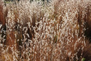 Sunlight on Fall Meadow Grass Close Up - Free High Resolution Photo