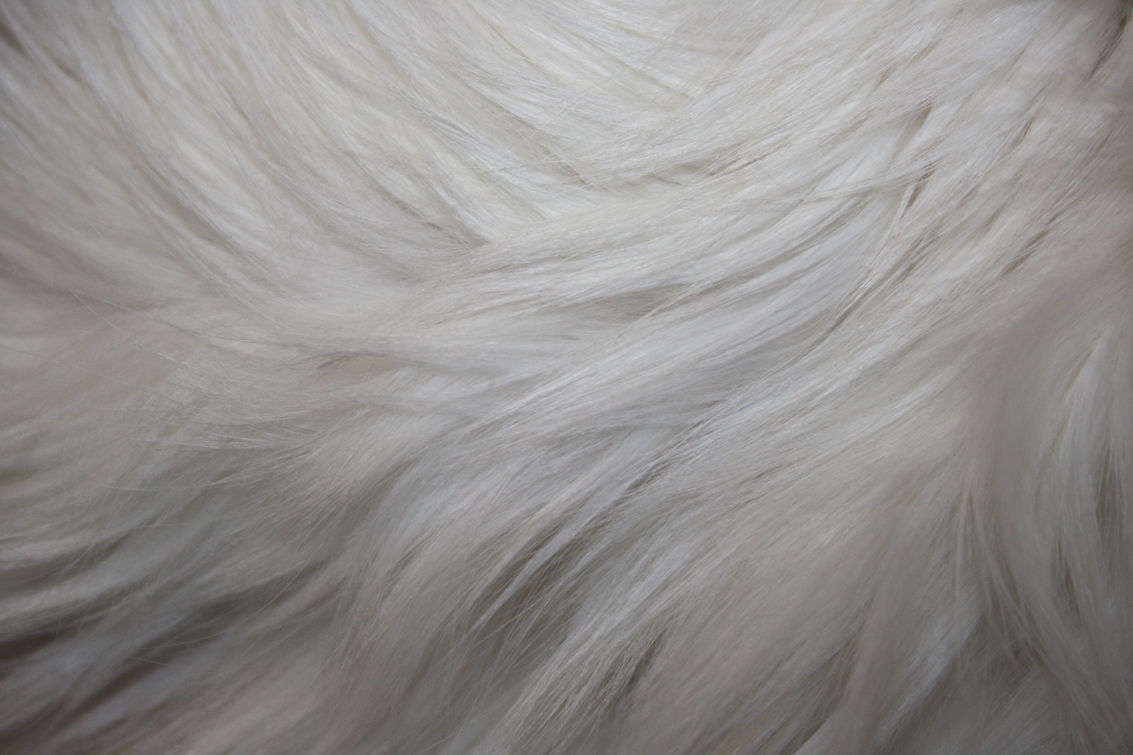 White Fur Texture Picture Free