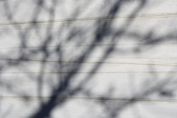 Winter Tree Branch Shadows on White Paneled Wall Texture - Free High Resolution Photo