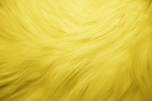 Yellow Fur Texture - Free High Resolution Photo
