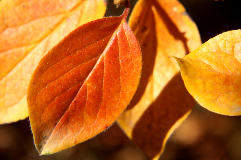 Autumn Leaves Close Up Picture Free Photograph Photos Public Domain