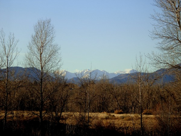 Mountains Behind Winter Trees - Free High Resolution Photo