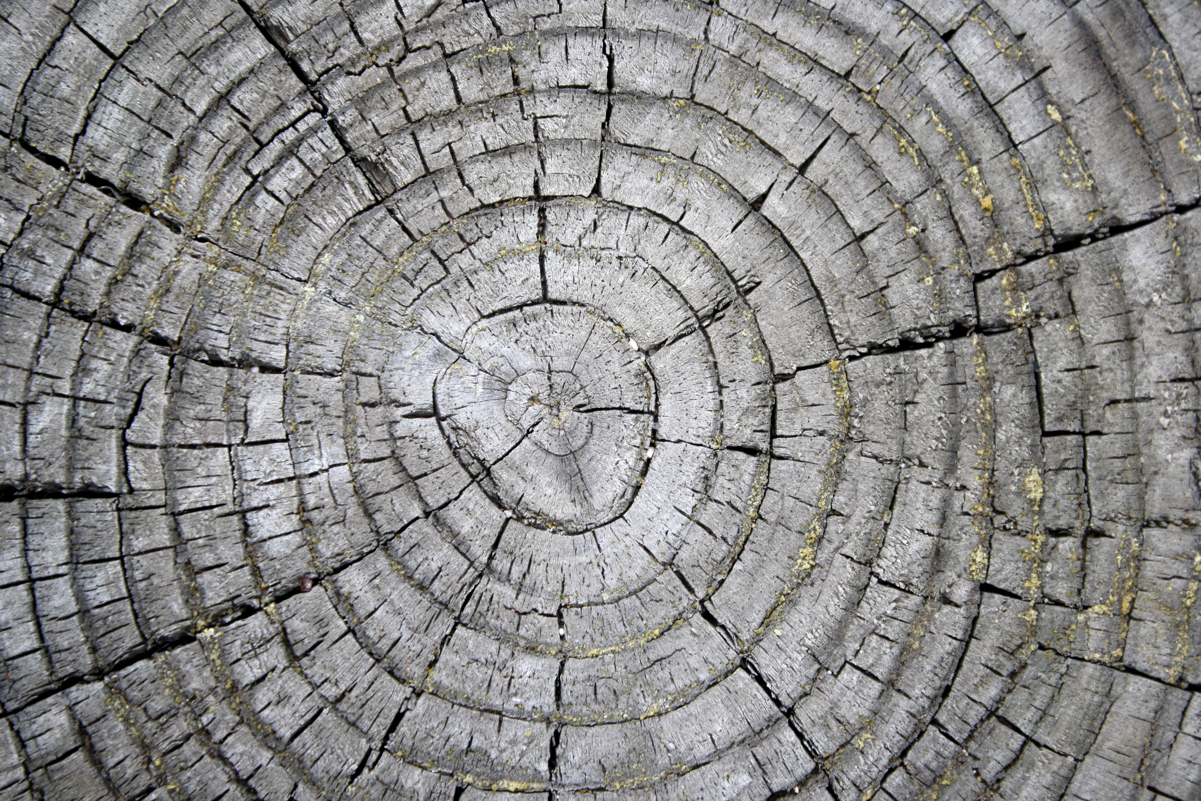 Tree Rings On Weathered Stump Texture Picture Free