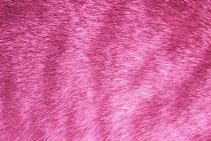 Pink Tabby Fur Texture - Free High Resolution Photo