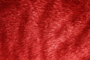 Red Tabby Fur Texture - Free High Resolution Photo