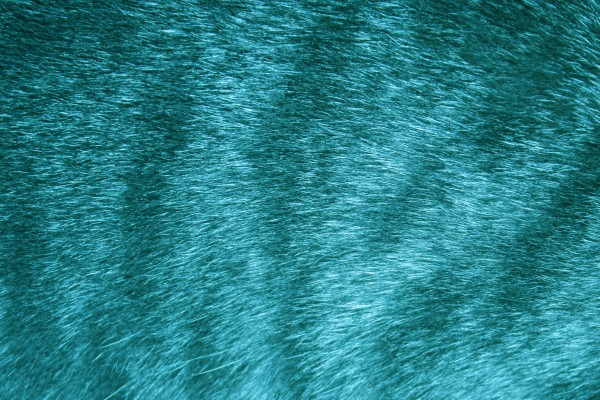 Teal Tabby Fur Texture - Free High Resolution Photo