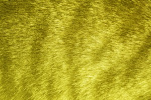 Yellow Tabby Fur Texture - Free High Resolution Photo