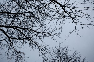 Winter Tree Branches - Free High Resolution Photo