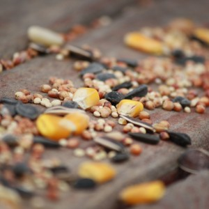 Birdseed Scattered on Deck Boards - Free High Resolution Photo