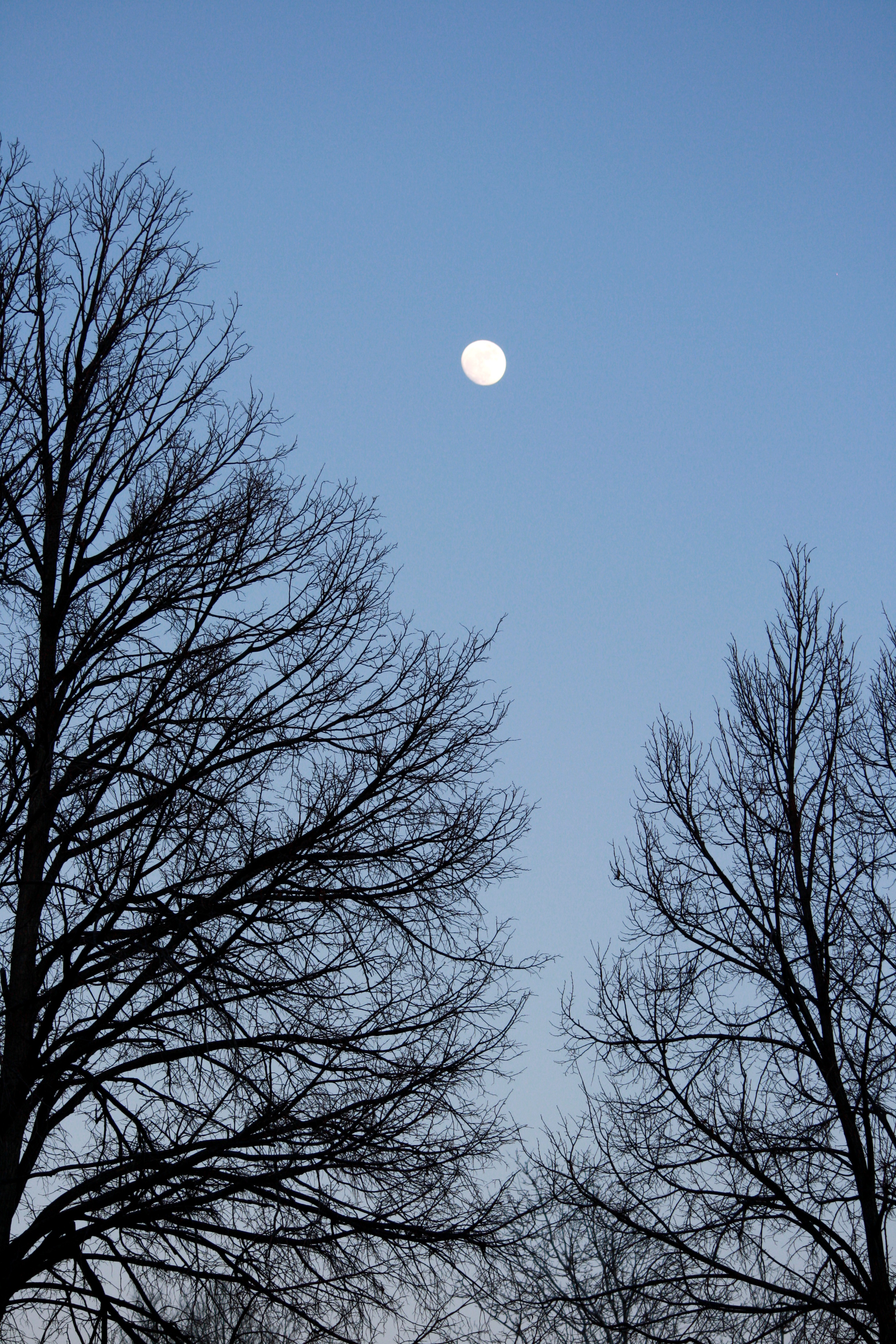 Moon And Winter Tree Branches Picture Free Photograph