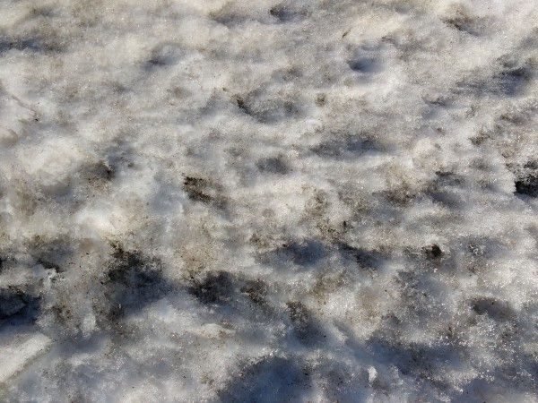 Dirty Snow Texture - Free High Resolution Photo