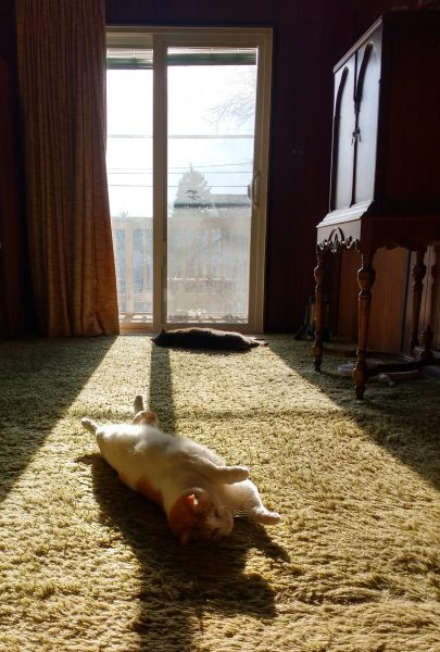 Cats Lounging in a Sunbeam - Free High Resolution Photo