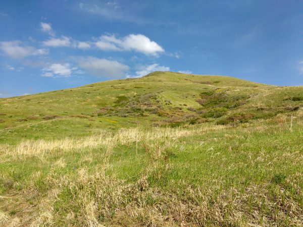 Grass Covered Hill - Free High Resolution Photo
