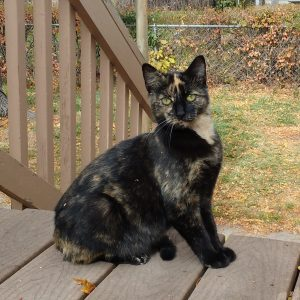 Tortie Cat - Free High Resolution Photo