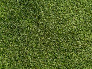 Grass Lawn Texture - Free High Resolution Photo