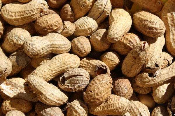 Roasted Peanuts in the Shell - Free High Resolution Photo