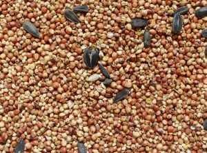 Birdseed Texture - Free High Resolution Photo