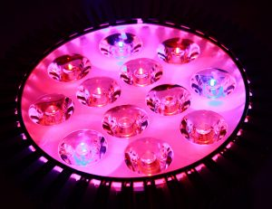 Pink and Blue LED Grow Light - Free High Resolution Photo