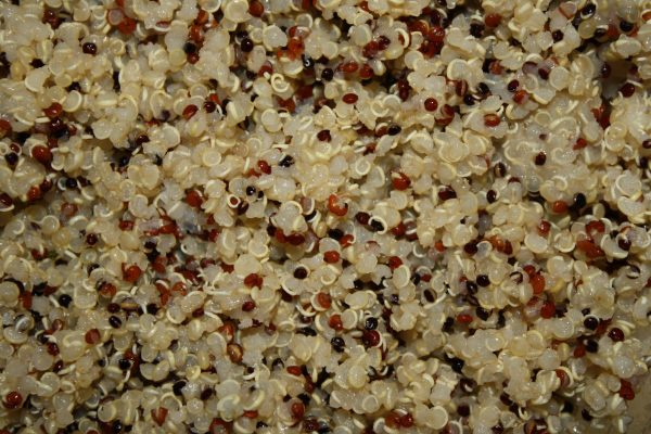 Cooked Tri-Color Quinoa Closeup Texture - Free High Resolution Photo