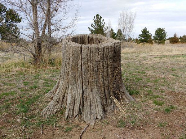 Hollow Tree Stump - Free High Resolution Photo